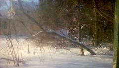 Snowy trees - TMT (Maenette1) Tags: trees snow winter backyard menominee uppermichigan treemendoustuesday flicker365 allthingsmichigan absolutemichigan projectmichigan michiganwinter