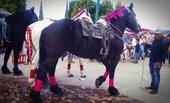Antes muerta que sencilla (mayavilla) Tags: caballo feria horse foto mexicano mexico tobecontinue animal