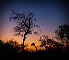 Nkasa Rupara (Kevin Rheese) Tags: africa nkasarupara silhouette sunset namibia nationalpark twilight tree landscape dusk zambeziregion na