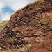 Radiolarian ribbon cherts (Franciscan Complex, Lower Jurassic-Lower Cretaceous; southern Marin Peninsula, San Francisco Bay, California, USA) 54