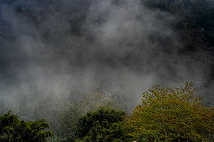 Heavy fog (bodro) Tags: sapa vietnam foggy hazy heavyfog landscape ricefields