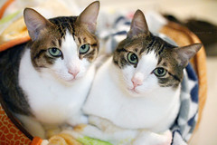 Sam & Jim (Steve only) Tags: canon eos m2 eosm2 ef 50mm 118 stm 5018 f18 viltrox 唯卓仕 efeosm2 071x 07xadapter lensturbo speedbooster focalreducer 减焦增光 cats sam jim