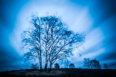 It's a kind of magic (Pascal Riemann) Tags: natur birke haltern deutschland baum pflanze westruperheide langzeitbelichtung germany longexposure nature plant