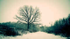 Winter (BalintL) Tags: winter cold snow snowing freeze freezing tree forest trees woods uwa light