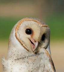 110623616 (TARIQ HAMEED SULEMANI) Tags: sulemani tariq tourism trekking tariqhameedsulemani winter wildlife wild birds nature nikon