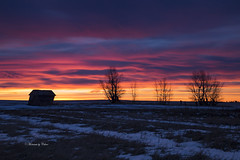 Praire Sunrise (Canon Queen Rocks (2,538,000 + views)) Tags: sunrise colours barn trees silhouettes sky clouds canada prairies snow pinks reds dawn nature beiseker alberta landscapes
