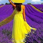 Дама в поле