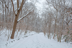 Snow Road (Picocoon图茧) Tags: snow road tree bare white winter cold nature tranquility tranquil woods