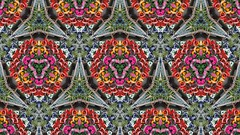 Notcutts Garden Centre - flowers kaleidoscope effect (ell brown) Tags: monkspath shirley solihull westmidlands england unitedkingdom greatbritain stratfordrd stratfordrdshirley notcutts notcuttsgardencentreandrestaurant notcuttssolihull solihullnotcuttsgardencentre mobile mobileshots sony sonyxperiaxz3 flower flowers kaleidoscopeeffect