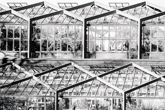 Geology vs Geometry (dlerps) Tags: amount botanicgarden daniellerps eu europe germany hamburg lerps nature northergermany park photography plantenunblomen sony sonyalpha sonyalpha99ii sonyalphaa99mark2 sonyalphaa99ii httplerpsphotography lerpsphotography greenhouse spanischeterrassen plants architecture monochrome blackwhite bw square building windows window sigma sigmaapo70200mmf28exdghsm