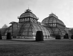 Palmenhaus (Martin Schachermayer) Tags: wien österreich europa vienna austria europe intrepidcamera4x5mkii rodenstocksironarn135mmf56 ilfordfp4 blackwhite 4x5 largeformat architecture wienerfototreff schönbrunn palmenhaus