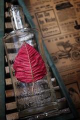 Poinsettia (northernshy) Tags: poinsettia leaf red redleaf bottle glassbottle bokeh stilllife