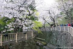Otonashi Shinsui Koen (takashi_matsumura) Tags: otonashi shinsui koen park oji kitaku tokyo ngc japan nikon d5300 sakura cherry blossoms 音無親水公園 王子 北区 東京 桜 afp dx nikkor 1020mm f4556g vr