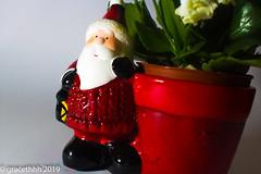 Santa's Bringing Flowers - 020 (gracethhh) Tags: 2019 red2019 red red365 redjanuary january januaryred january2019 photochallenge photochallenge2019 365 365photochallenge 365photo 3652019