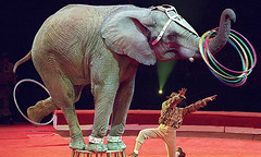 circus ssss (BIRDMAN Vegan Future) Tags: vegan animals food meat recipes cooking diet low carb protein foodie bacon healthy health