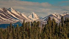99/365 View of the Chugach Range (OhWowMan) Tags: 365the2019edition 3652019 day99365 09apr19 ohwowman nikon d3300 acdseepro9 alaska anchorage chugach mountains landscape trees forest alaskastateparks chugachstatepark view spring springtime springtimeinalaska northsuicidepeak peak hike rugged hiking steep climb traverse ascent