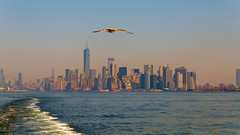 NY Seagull (jonathan.scaife81) Tags: nyc new york city skyline staten island ferry manhattan seagull bird world trade canon 6d tamron28300 tamron 28300mm