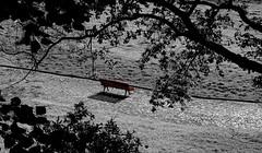 Waiting for me (Behappyaveiro) Tags: porto portugal serralves europa digitalmanipulation park trees bwandcolour bw sun bench red shadow leaf path alone back grass