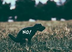 No Poop! (oterrason) Tags: dog poop kenmoretownsquare signage rules installation washington cityofkenmore fuji fujifilmxt2 fujinon50mmf2rwr xf50mmf2rwr fujinon ordinance laws etiquette civility society scoop
