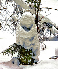 Снежный смайлик (VikTori_kvl23) Tags: зима лес пинежскийзаповедник снег сугроб nature beauty closeup bright russia plants природа растения флора frost tree winter forest landscape
