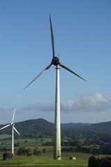 Ravenshoe_20190216_0028 (O En) Tags: wind turbines ravenshoe cows
