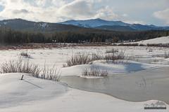 Frozen Pole Creek (kevin-palmer) Tags: bighornmountains bighornnationalforest wyoming nikond750 tamron2470mmf28 snow snowy winter cold ice frozen wetland loafmountain polecreek clouds