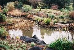 pond (mylesey) Tags: vintage 35mm film camera canon ae1 brown winter dead nature