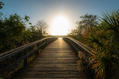 Into the sun.. (MJ6606) Tags: evening florida nature park perspective pier sky sunset trees walk wood