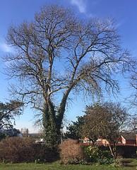 Ready for Spring, No.2. (bwanamdevu@yahoo.co.uk) Tags: wintersun trees sconceanddevonpark newark