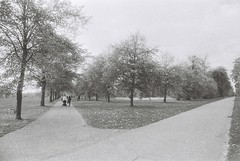 Kensington Gardens (goodfella2459) Tags: nikonf4 afnikkor24mmf28dlens fomapanretropan320 35mm blackandwhite film analog london park gardens paths kensingtongardens trees nature bwfp