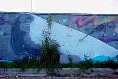 white whale (nothinginside) Tags: white whale moby dick balena bianca pescara silvi abruzzo graffiti murale mural wall street art pop urban 2019