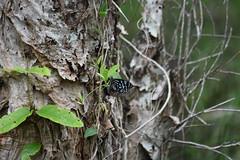 butterfly (22Lavender22) Tags: elements nature d3400 nikon wildlife australia