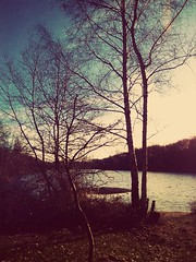 RETRO ZEN (novaexpress93) Tags: novaexpress93 lake nature edited landscape retro trees lofiphotography