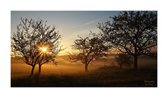 --- Here Comes The Sun --- (~Scimo~) Tags: sonnenaufgang sunrise landscape landschaft baum tree nebel fog scimo tau dew natur nature deutschland germany sonne sun