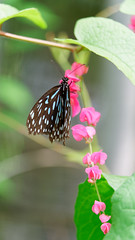2019-02-11_12-36-36_ILCE-6500_DSC02760_DxO (Miguel Discart (Photos Vrac)) Tags: 2019 202mm animal animalphotography animals animalsupclose animaux butterfly chiangmai createdbydxo dxo e18135mmf3556oss editedphoto fleurs flowers focallength202mm focallengthin35mmformat202mm holiday ilce6500 iso1000 nature naturephotography papillon pet sony sonyilce6500 sonyilce6500e18135mmf3556oss thailand thailande travel vacances voyage