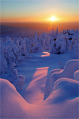 Finnish Lightshow (Sandra OTR) Tags: finland lapland suomi tykky trees forest sunset sunrise sunshine winter snow snowy cold weather