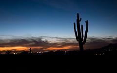 20171110-DSC05454 (Zachary Reiss-Davis) Tags: phoenixarizona sunset superstitionwilderness hiking landscapephotography saguarocactus silhouette apachejunction arizona unitedstates us