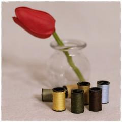 Still Life (N.the.Kudzu) Tags: tabletop stilllife bottle flower thread canondslr meike 85mmf28 macro lens ringlight photoscape frame home square