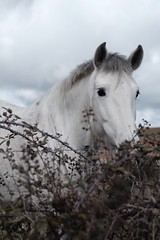 White Horse (Julio Andrade Photography) Tags: campo caballo blanco white animal horse