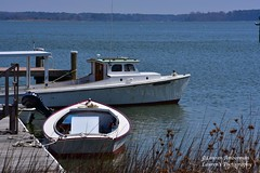 Darling Dorothy Lee (lauren3838 photography) Tags: laurensphotography lauren3838photography landscape boat boating workboat water milesriver chesapeakebay chesapeakebaymaritimemuseum stmichaels maryland md marylandphotographer dorothylee fishing cbmm nikon d750 talbotcounty talbotcountymd tourism postcard easternshore