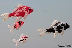 Poissons volants (faby22490) Tags: cerfvolant berck ciel vent poissons