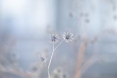 Color of winter (RutsuRoots) Tags: 180mm elmarit winter lightblue ilce7 sony