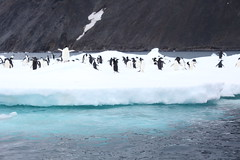 IMG_3818 (y.awanohara) Tags: adelie adeliepenguins penguins antarctica antarcticpeninsula wildlife january2019 icebergs ice icefloes