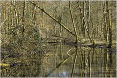 Swamps (HikerandBiker) Tags: canon canonef70200mmf4lusm eosr sumpf swamp wald forest trees bäume wasser feuchtgebiet water