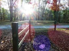 Happy Fence Friday (Hope2b) Tags: sunbeam bokeh fence ottersprings florida rays sunray hff