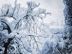 Winter (R_Ivanova) Tags: nature landscape winter snow tree textured sony bulgaria gabrovo outdoor blue white rivanova риванова природа пейзаж зима сняг дърво българия габрово текстура fav20