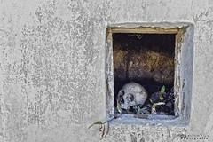 Cumpich 5502 ch (Emilio Segura López) Tags: cementerio cumpich campeche penínsuladeyucatán calavera huesos nicho méxico