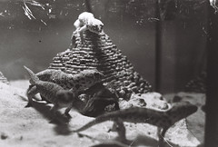 Lizards -2 (LexylexyXiao) Tags: fineart photography flim memory