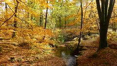 New Forest NP, Hampshire, UK (east med wanderer) Tags: stream newforestnationalpark nationalpark autumn highlandwater lyndhurst bracken beech hampshire