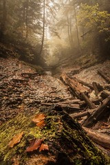 forest (Janis Sabanovs) Tags: forest autumn fall tree trees track hike hikes travel nature outdors mist fog
